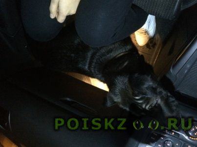 Найдена собака г.Павловский Посад