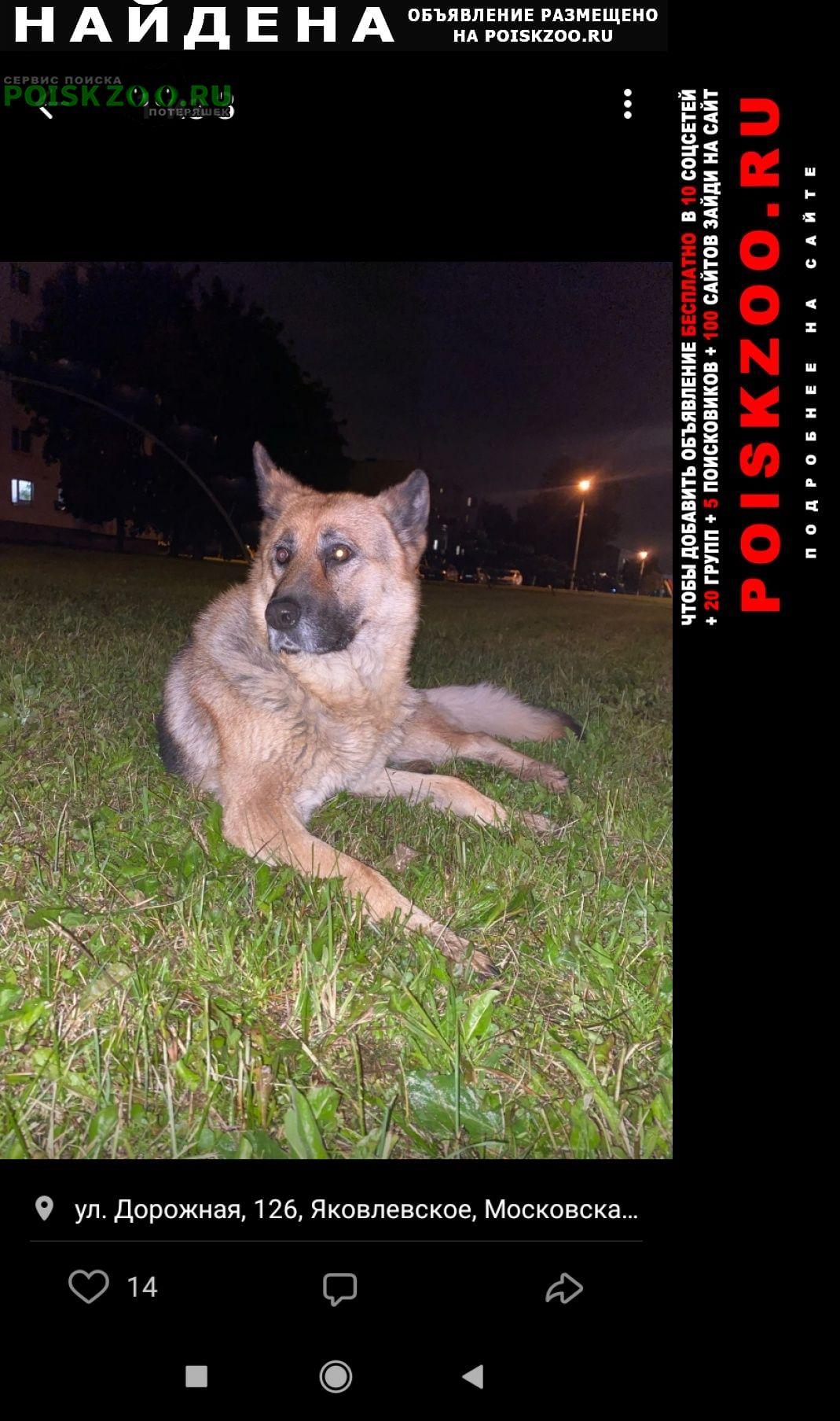 Найдена собака в новой москве.пос.ново-федоровское Москва