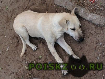 Найдена собака в октябрьском р-не г.Ростов-на-Дону