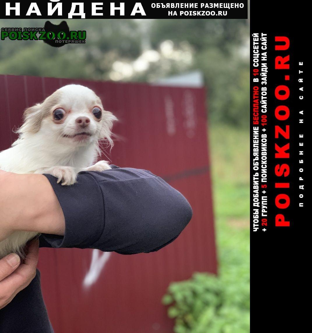 Найдена собака в истре Истра