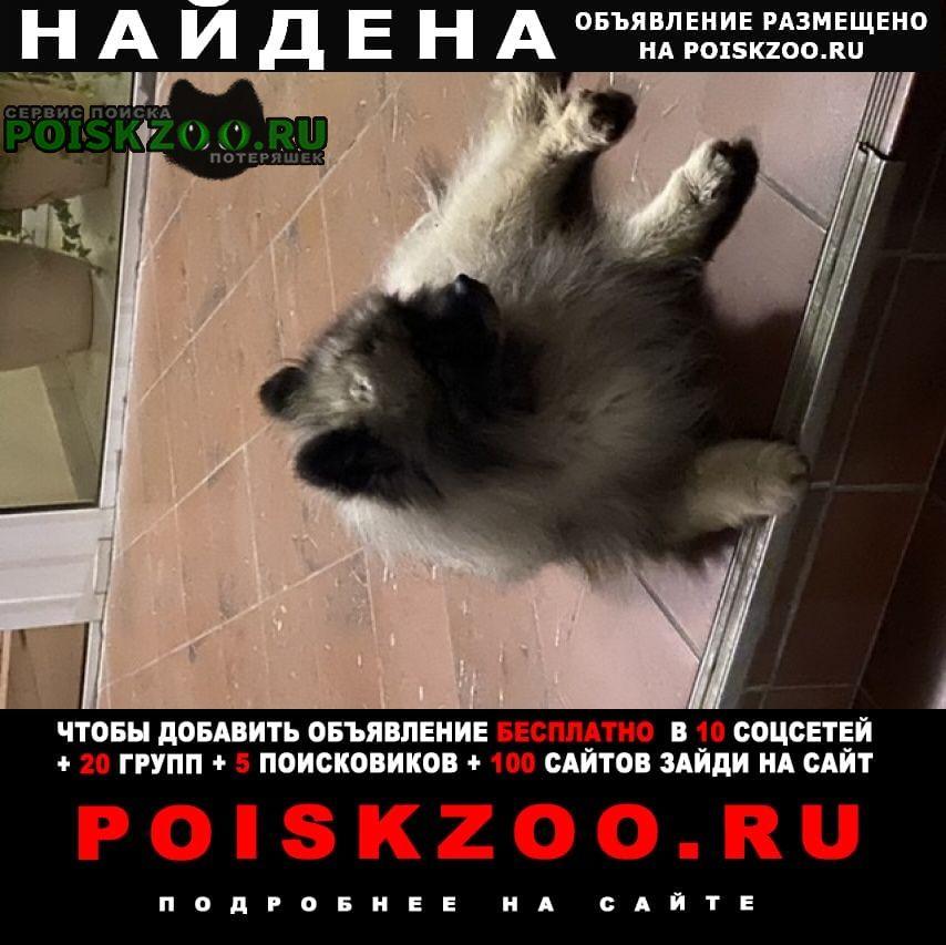 Одинцово Найдена собака кавказец