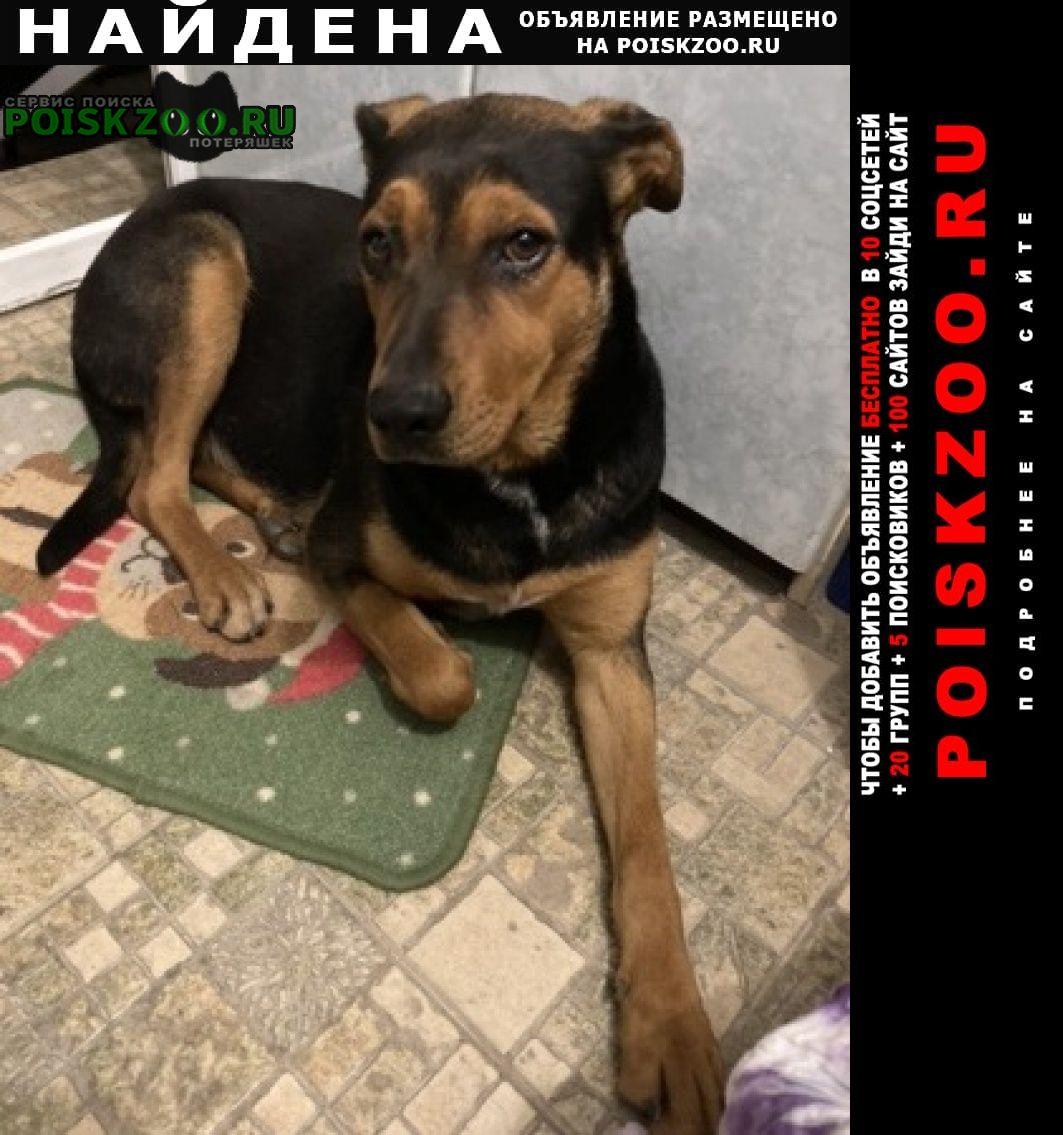 Найдена собака п. прохоровка Новороссийск