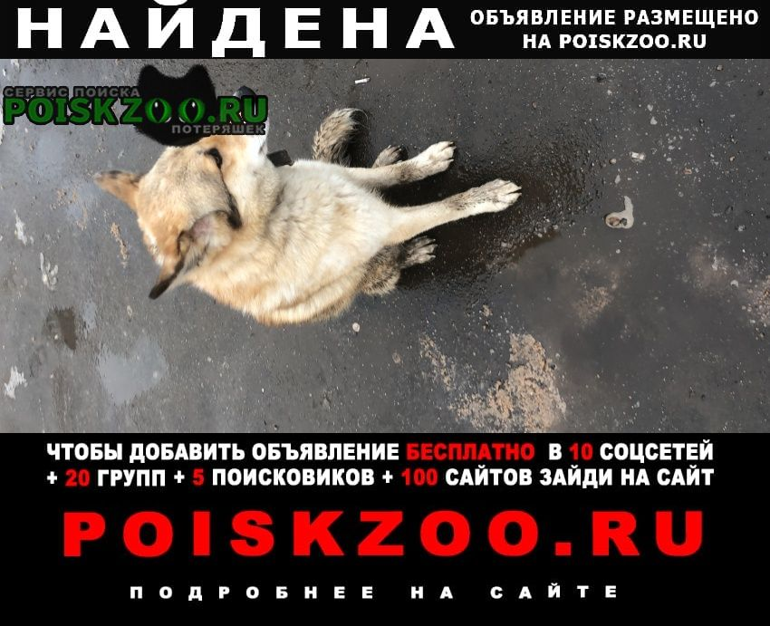 Найдена собака Пироговский