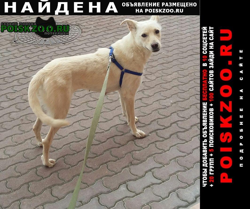 Найдена собака ищет семью. Москва