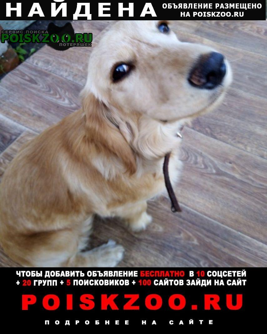 Найдена собака Белев