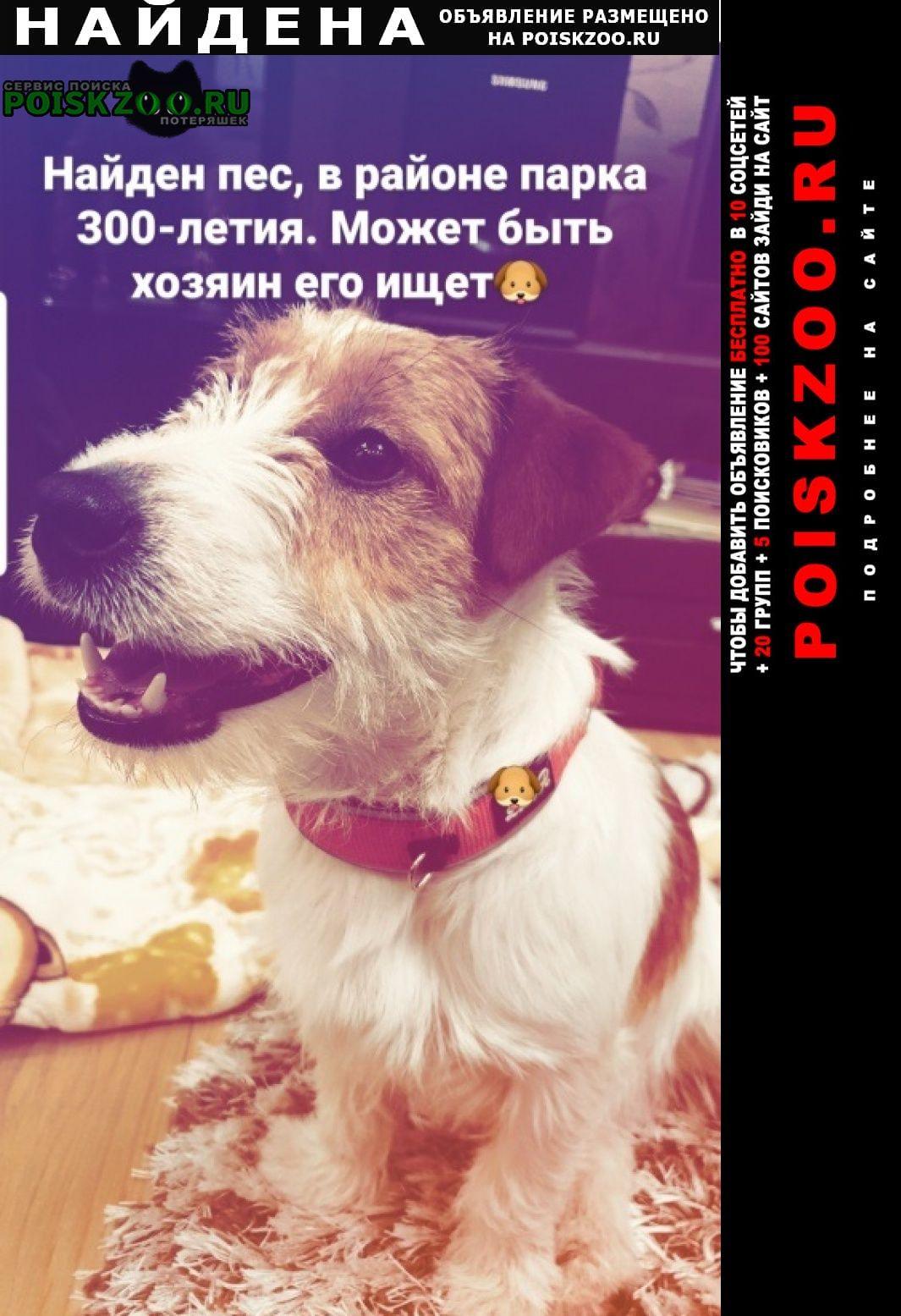 Найдена собака, джек рассел терьер Санкт-Петербург
