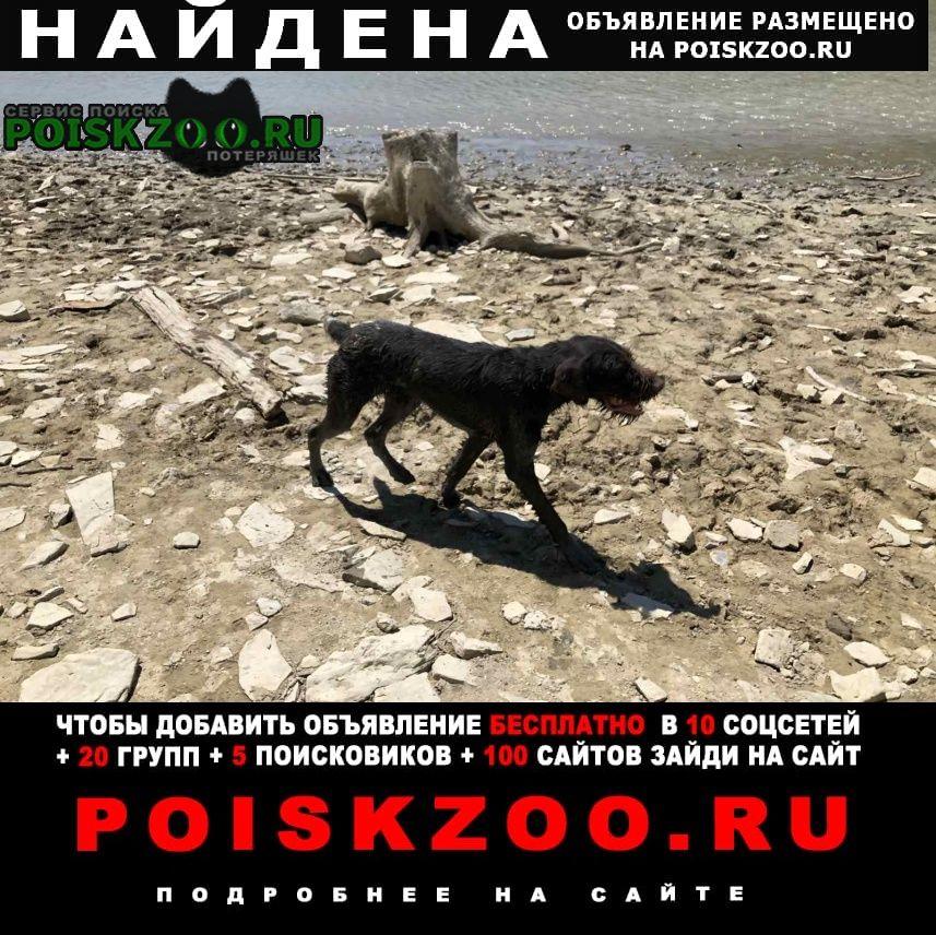 Найдена собака кобель г.Анапа