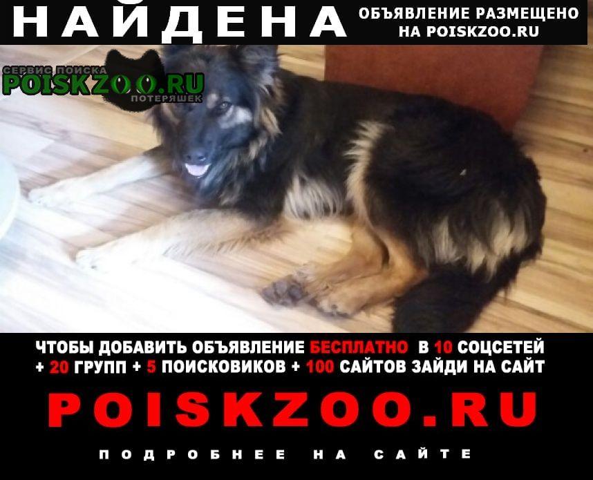 Найдена собака г.Брянск