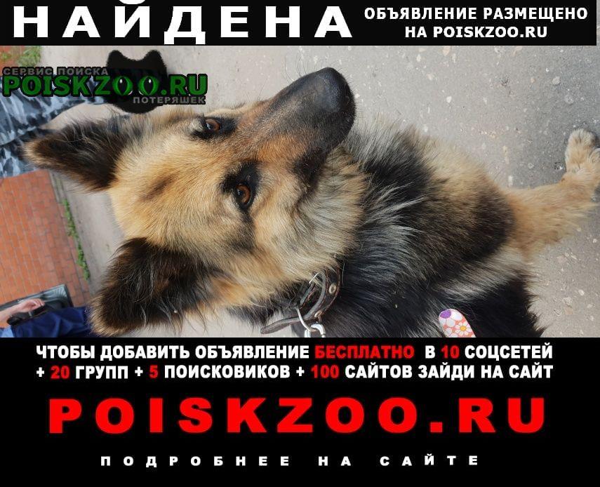 Найдена собака немецкая овчарка г.Воронеж