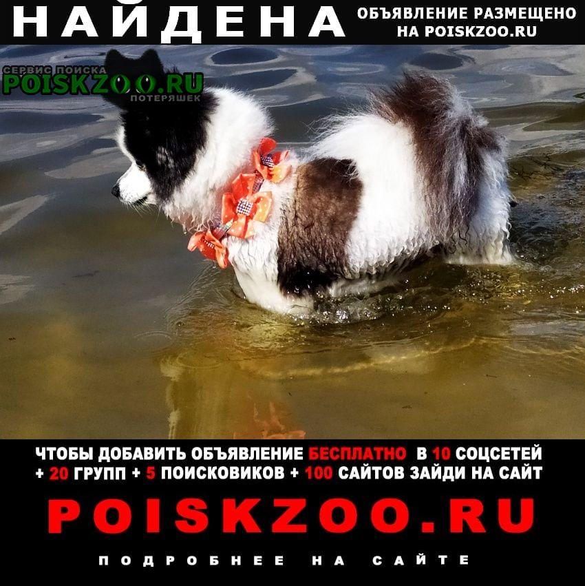 Найдена собака г.Луганск