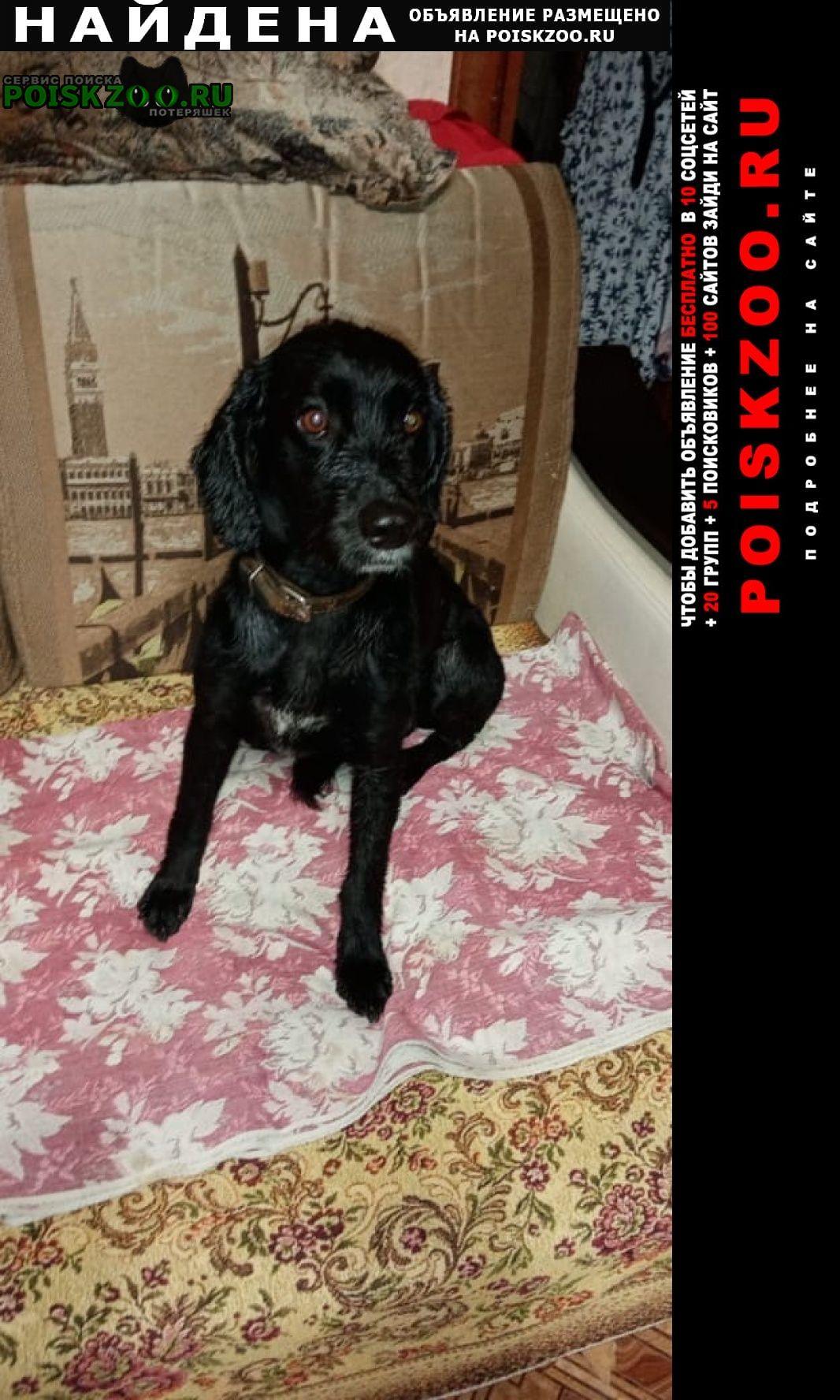 Найдена собака кобель спаниель Серпухов