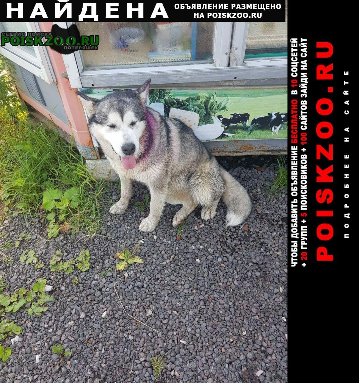 Найдена собака Верея