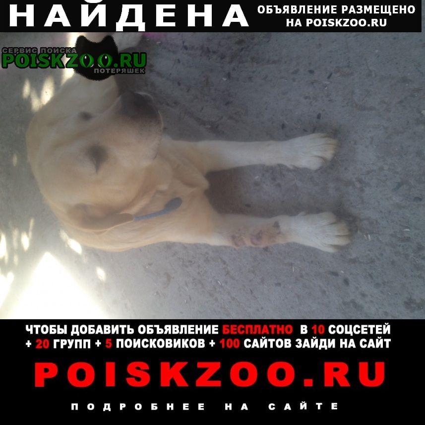 Найдена собака Сочи