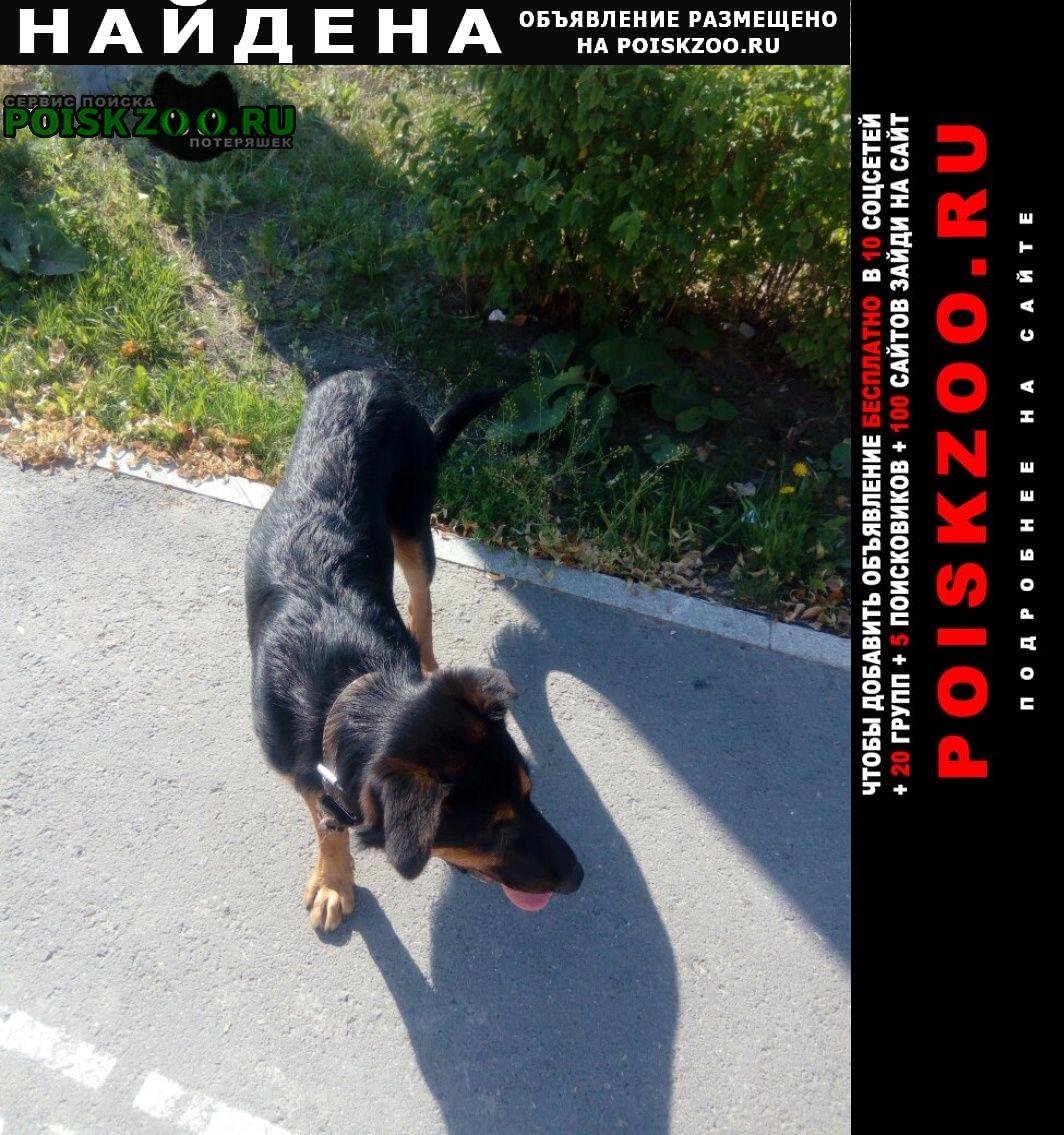 Найдена собака Екатеринбург