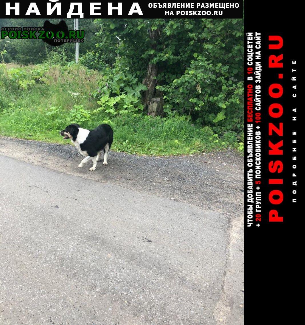 Найдена собака песик бродит на красноармейском шоссе Красноармейск (Московская обл.)