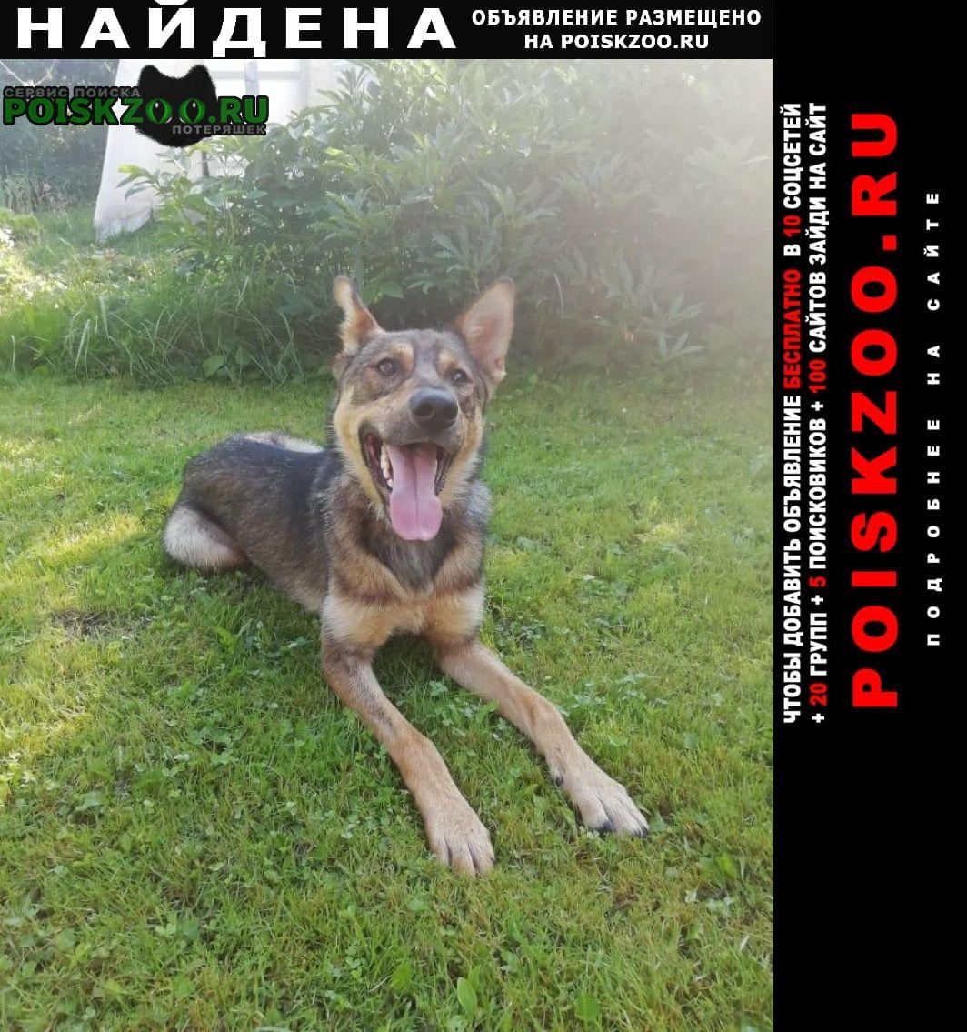 Найдена собака кобель, красная пахра, былово, тинао Троицк