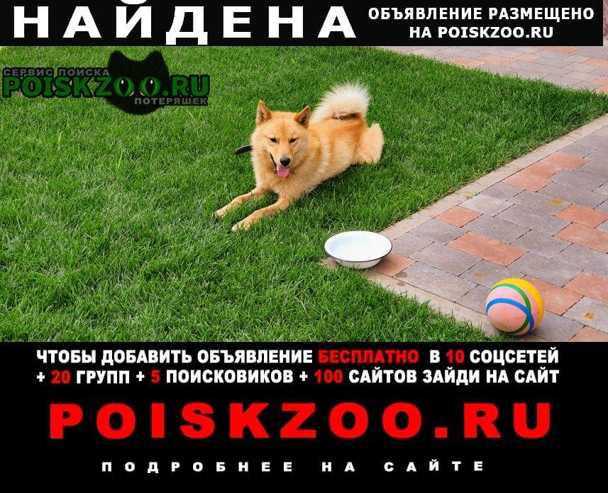 Найдена собака кобель финский шпиц Волжский (Самарская обл.)