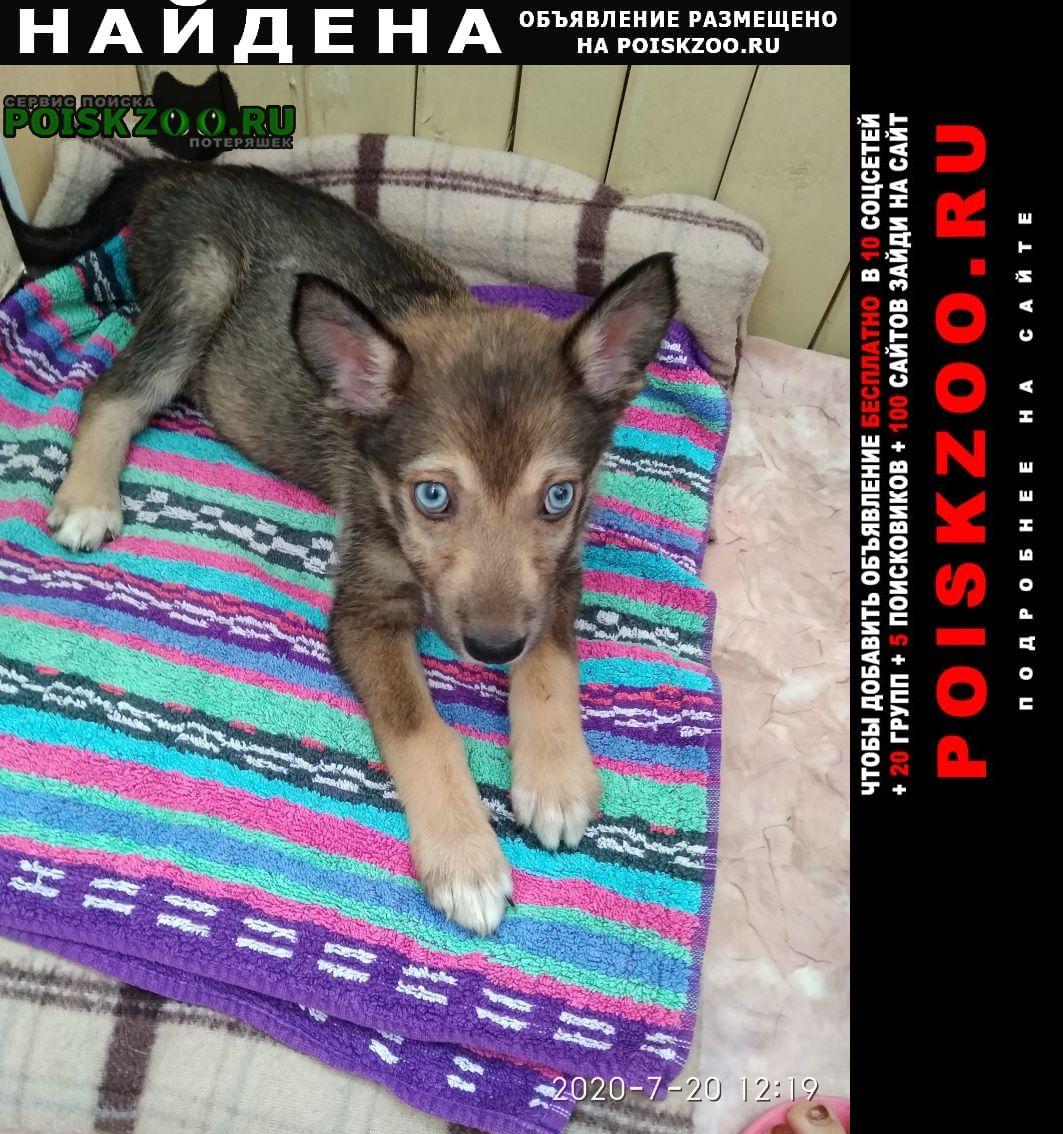 Найдена собака щенок около двух месяцев Ярославль