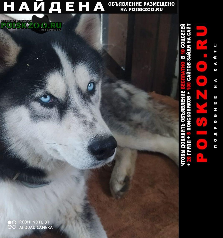Найдена собака кобель хаски Раменское