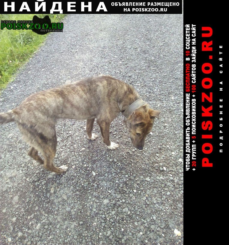 Найдена собака метис, девочка Истра