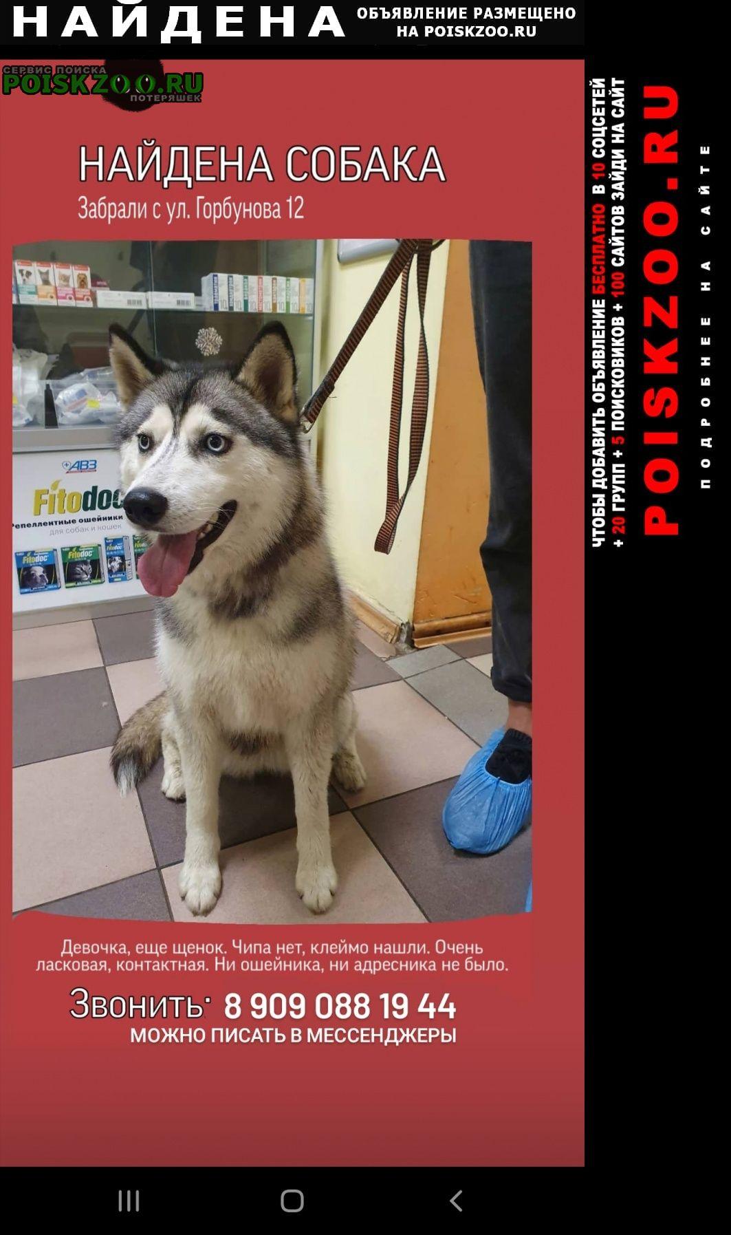 Найдена собака звонить по номеру:.. Москва
