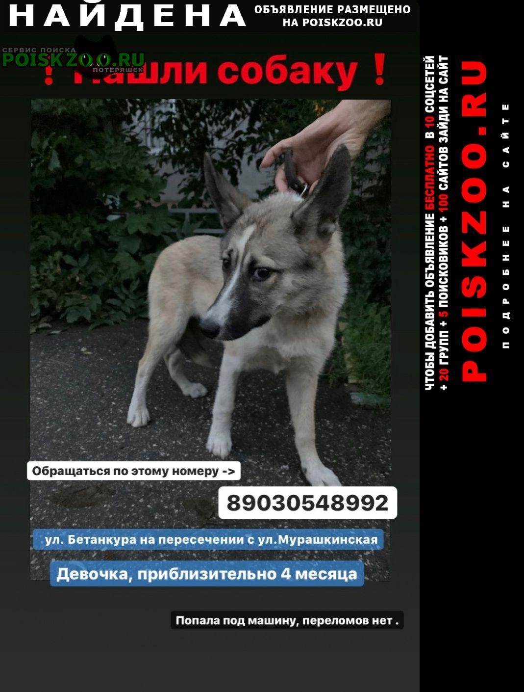Найдена собака ищу хозяина или добрые руки Нижний Новгород