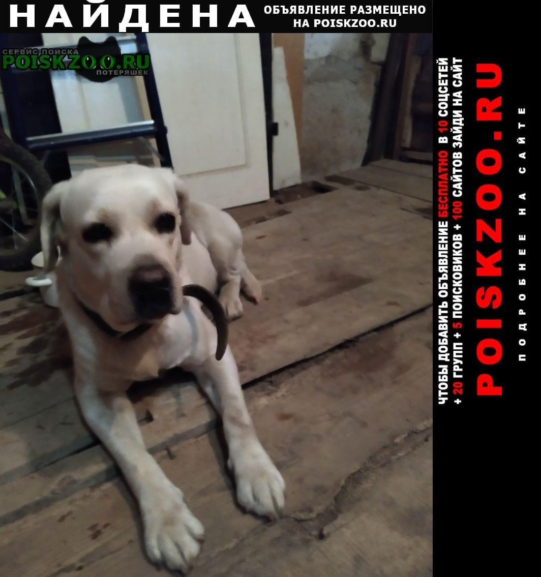 Найдена собака Владимир
