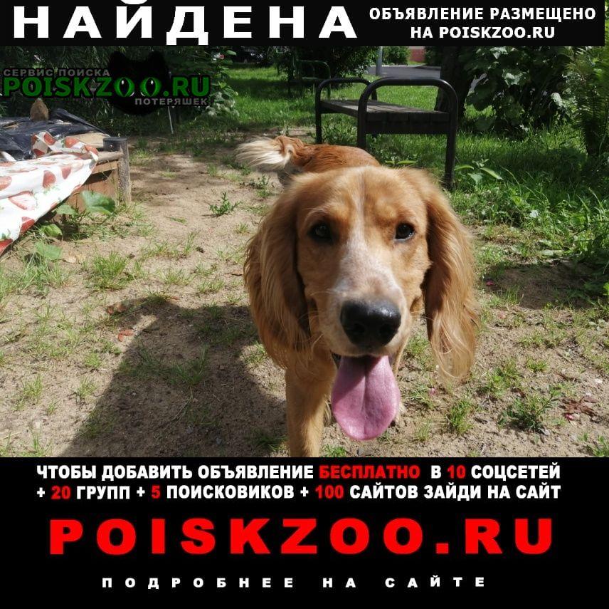 Найдена собака рыжий спаниель Москва