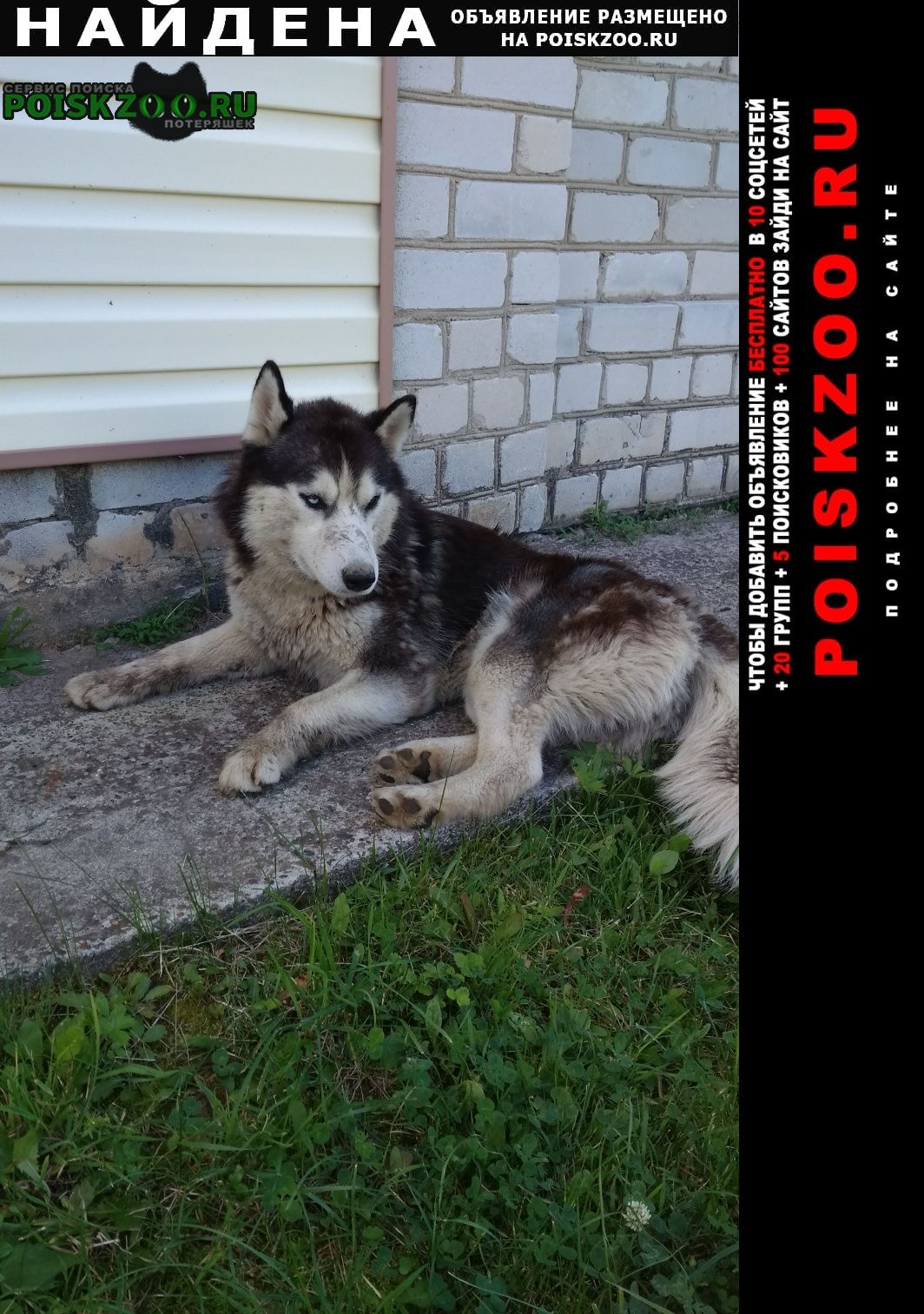Найдена собака хаски, мальчик Нижний Новгород