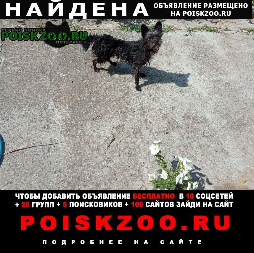 Найдена собака черный маленький кобель Симферополь