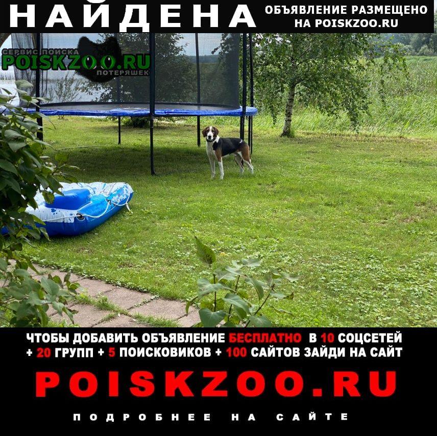 Найдена собака кобель, деревня лопотово Истра