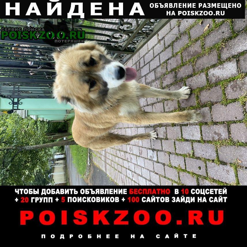Найдена собака на ул.ермоловой, похож на кавказца Королев