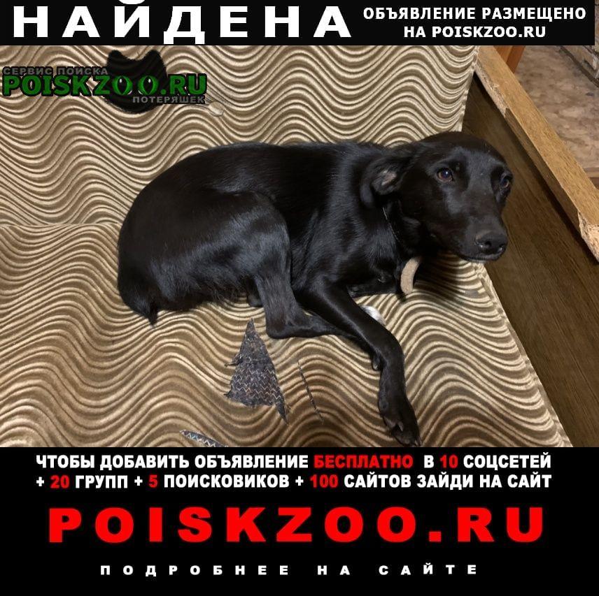 Найдена собака черная Воронеж