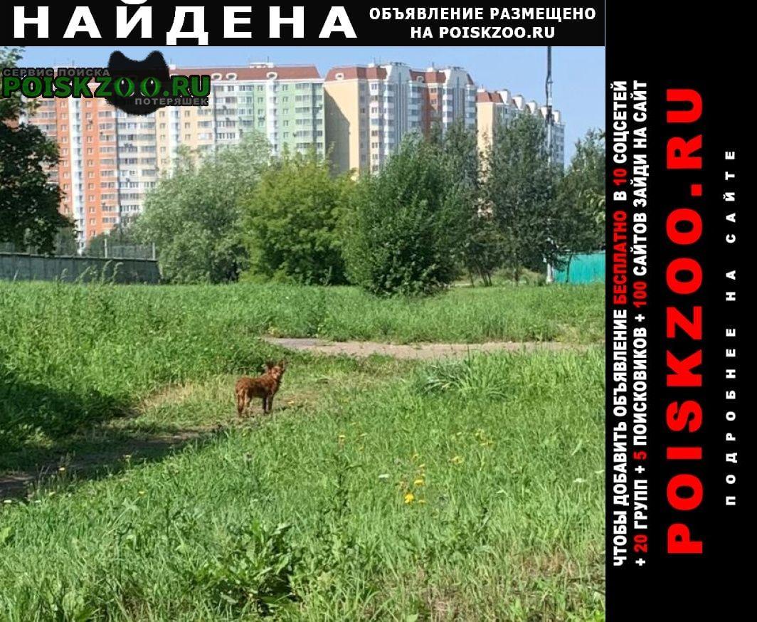 Найдена собака солнцево, замечена Москва