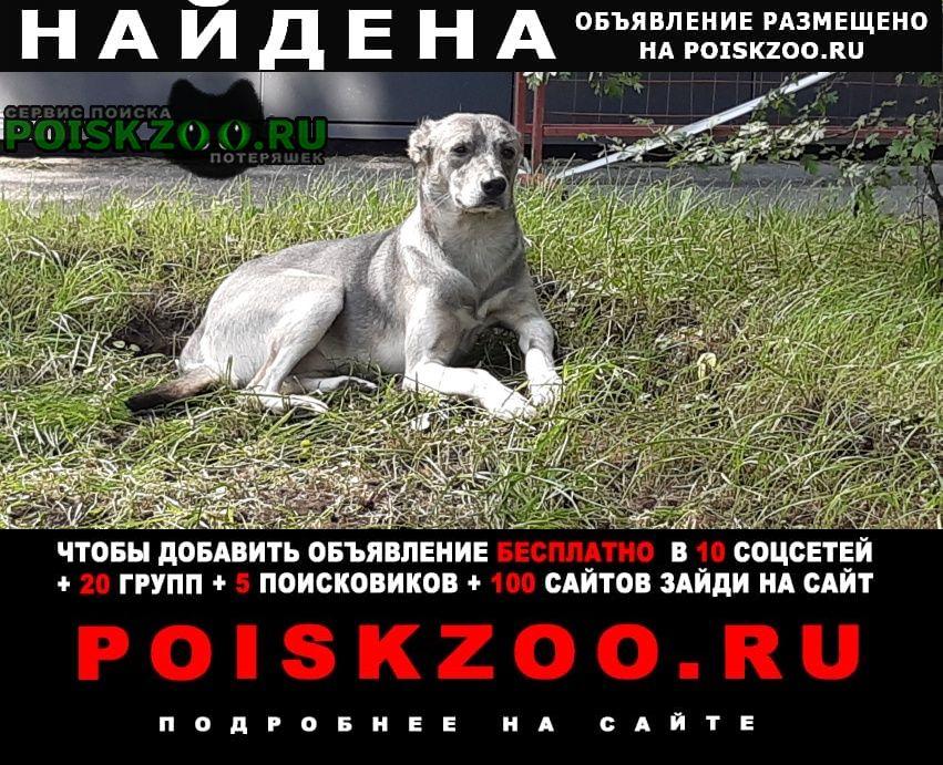 Найдена собака ухоженный кобель. дворняга. Москва