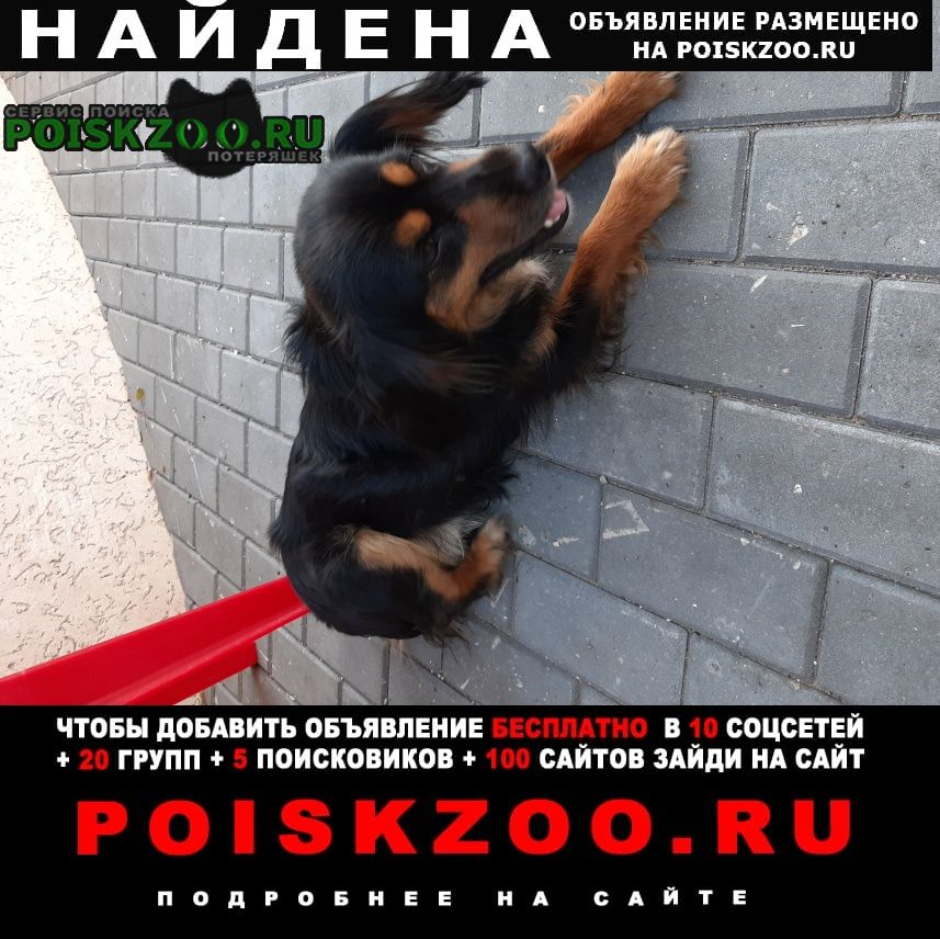 Найдена собака Самара