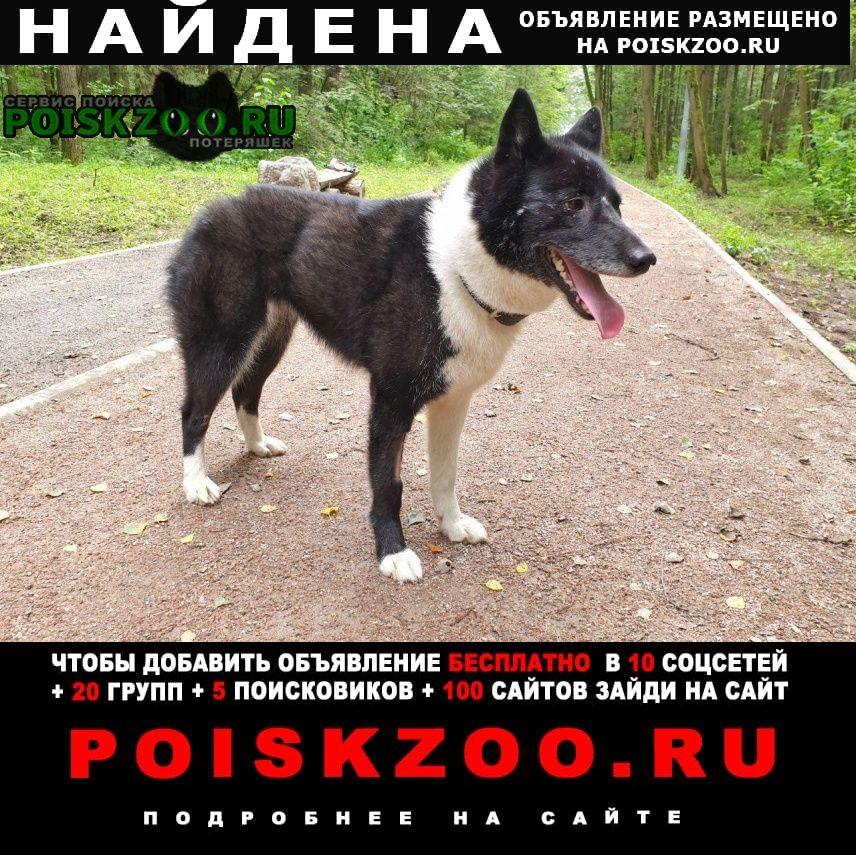 Найдена собака русско-европейская лайка ищет дом Мытищи