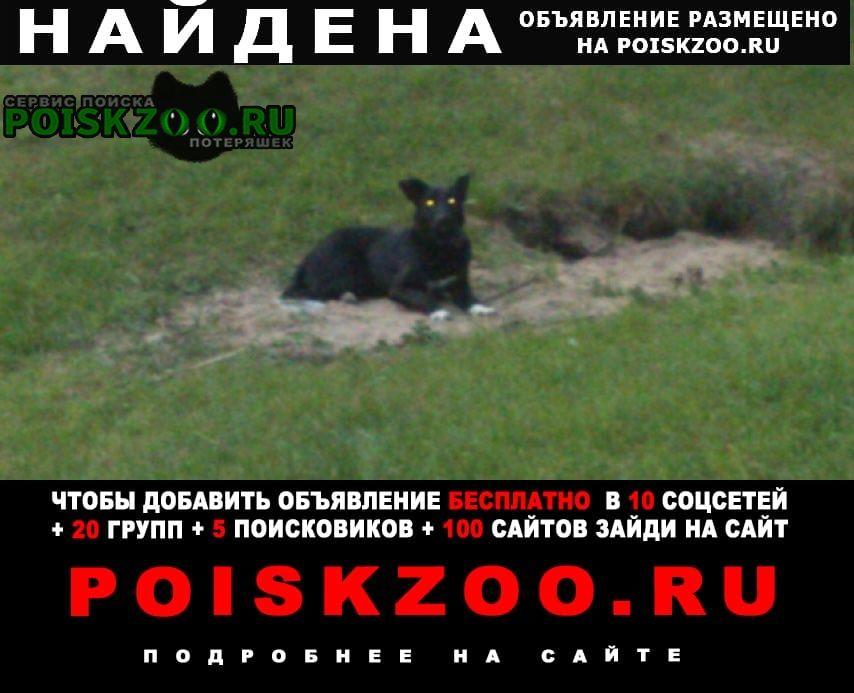 Найдена собака в красном ошейнеке Москва
