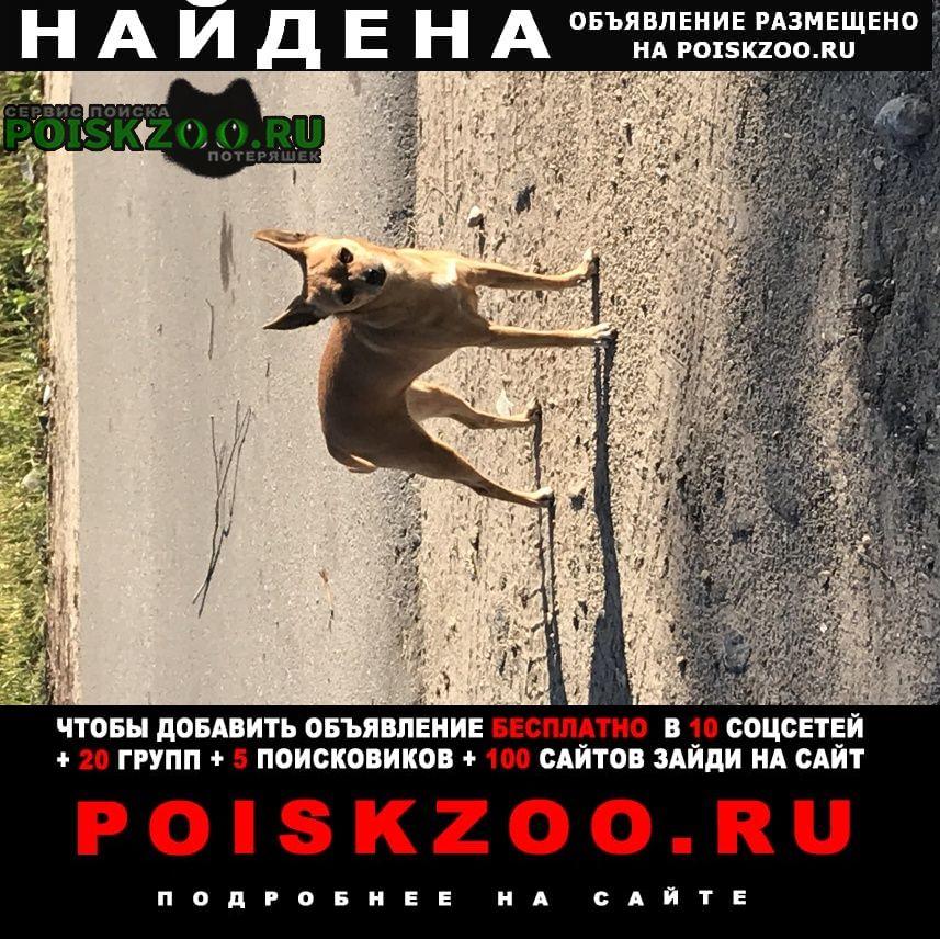 Найдена собака в пос.матырский в районе начальной школы Липецк