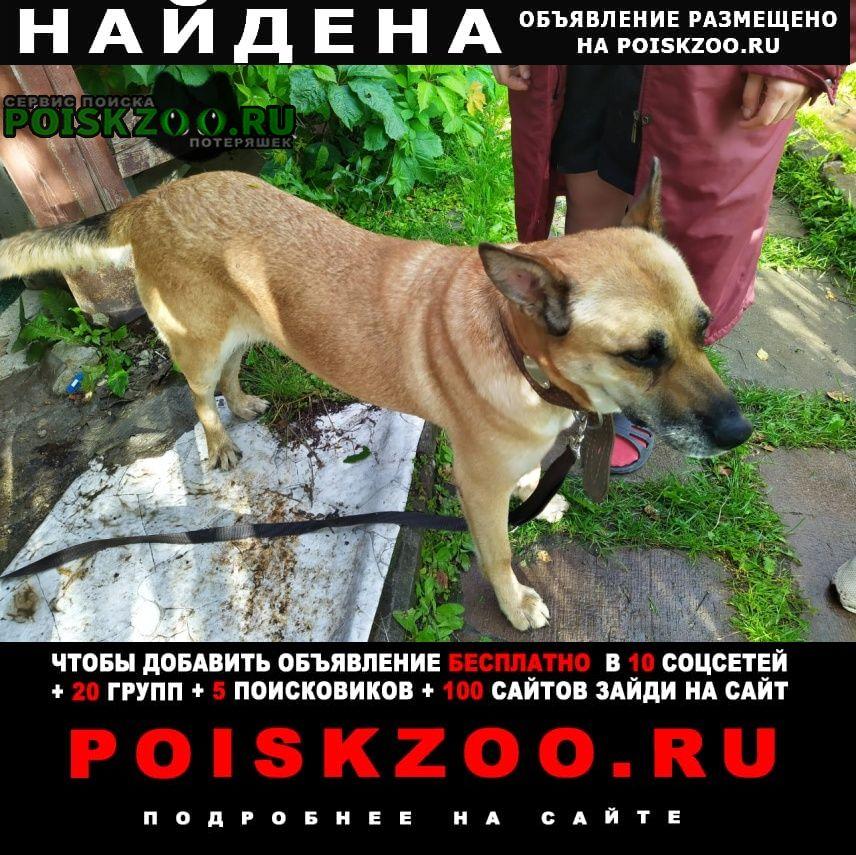 Найдена собака Михайловское