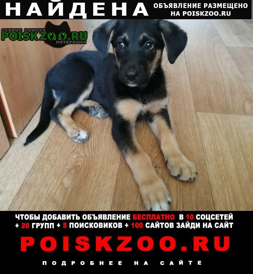 Найдена собака щенок Уфа