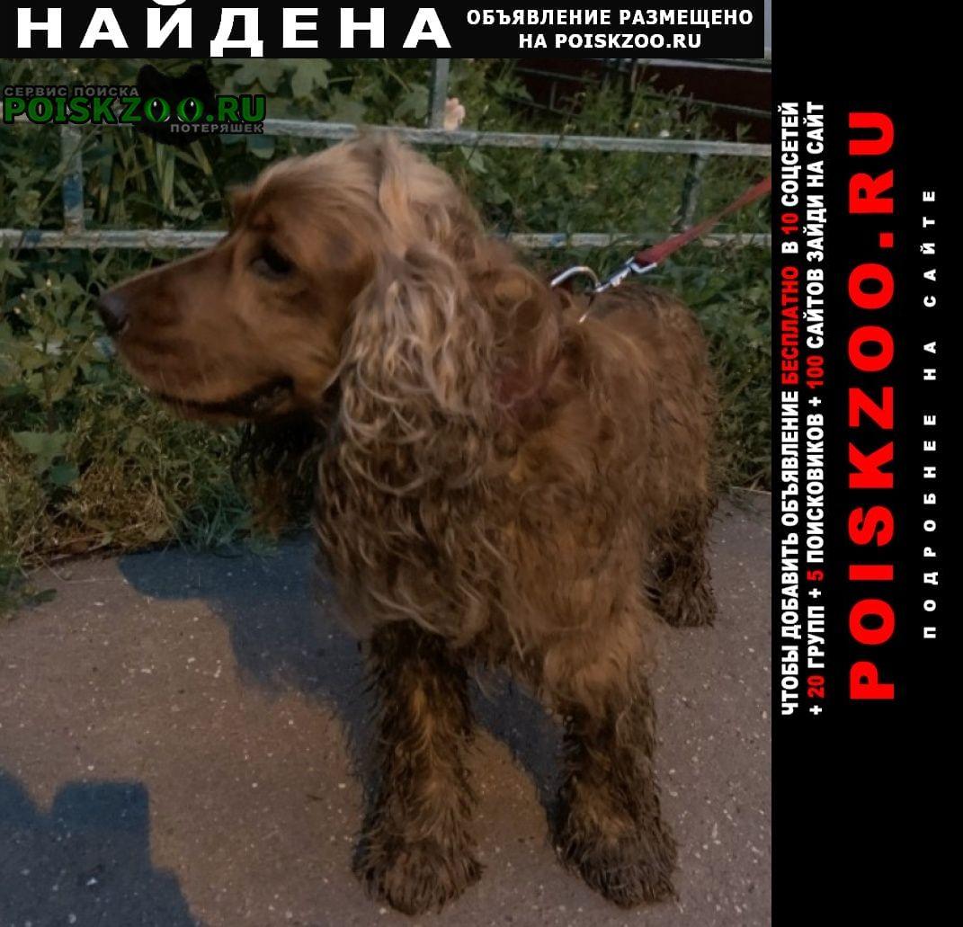 Найдена собака спаниель Москва