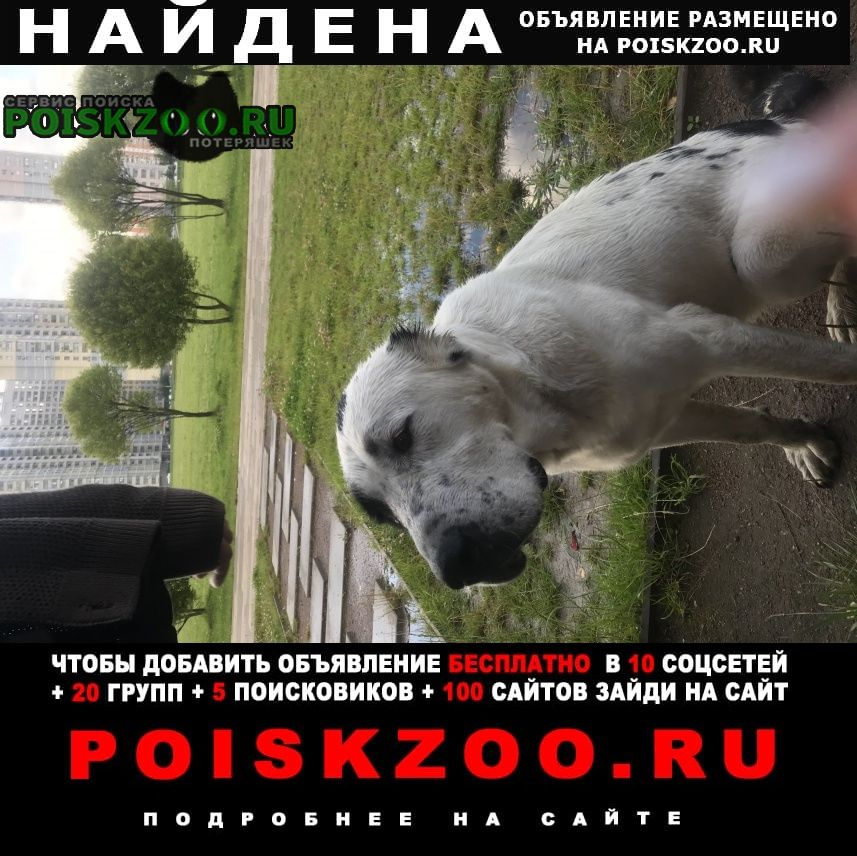 Найдена собака гуляет по парку алабай Москва