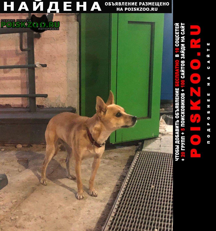 Найдена собака Опалиха