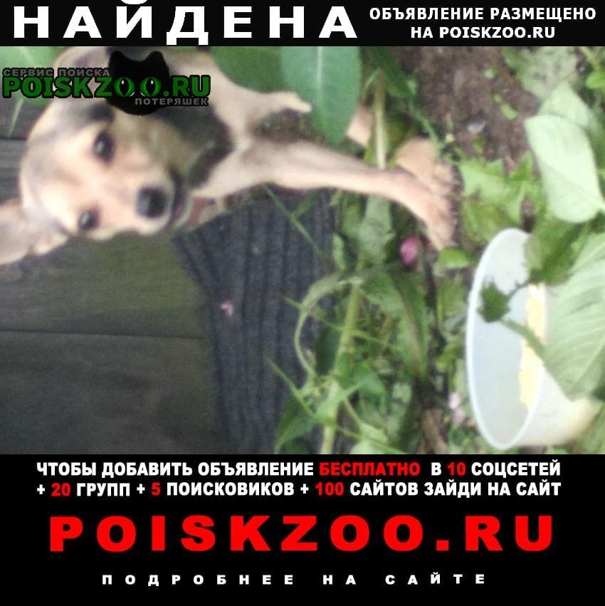 Найдена собака ищет хозяина Иркутск