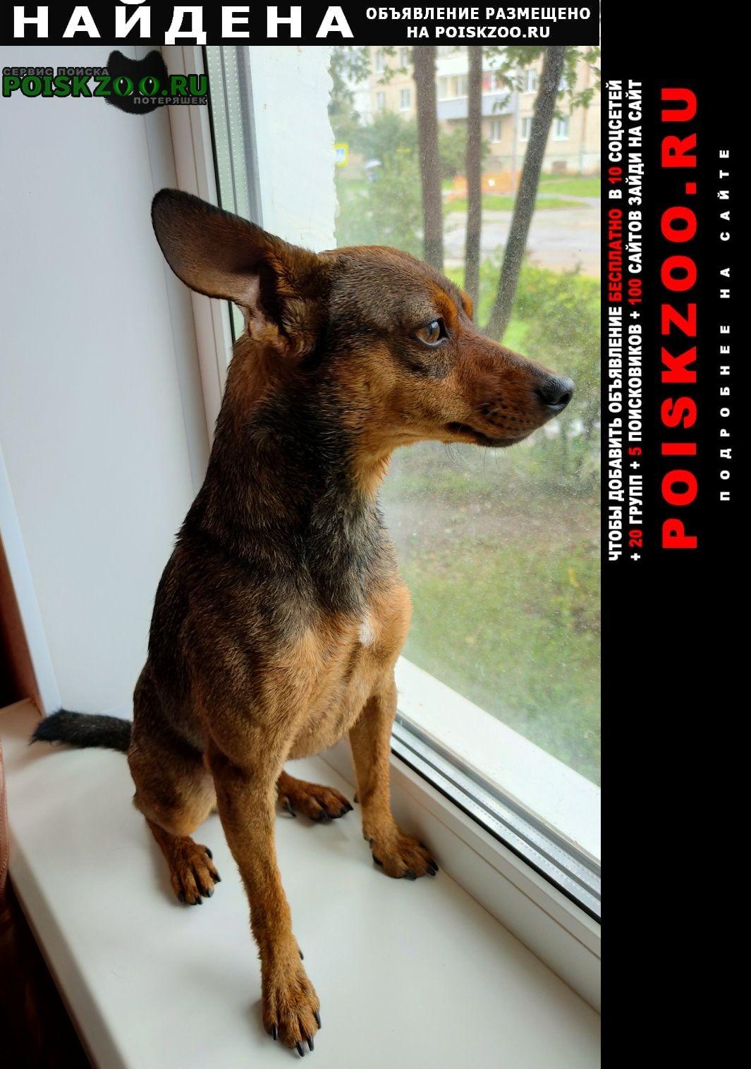 Найдена собака кобель Йошкар-Ола