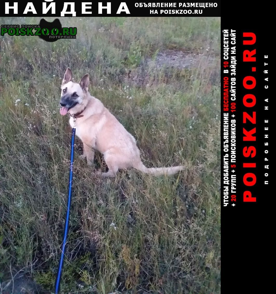 Найдена собака Тула