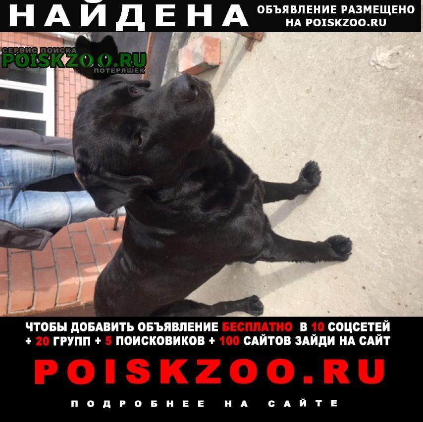 Найдена собака лабрадор Рязань