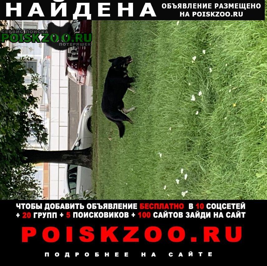 Найдена собака гуляет возле каширского двора-2, и на лу Москва