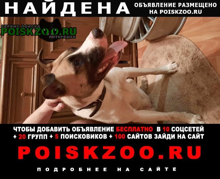 Найдена собака сука. в поводком Сургут